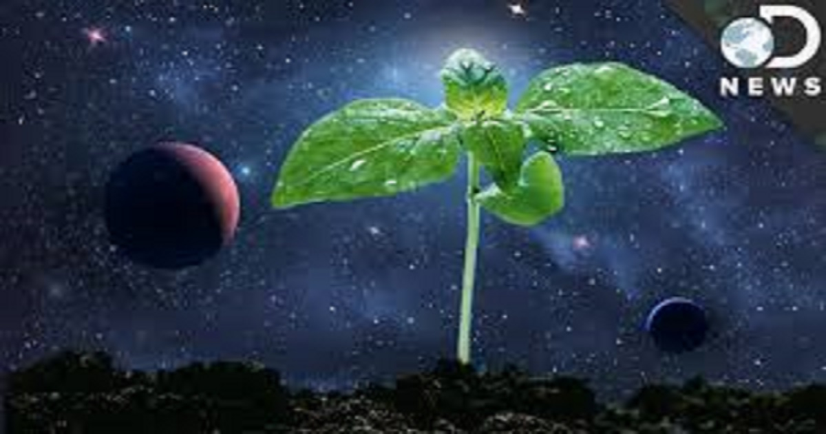HOW NASA IS LEARNING TO GROW PLANTS IN SPACE AND ON OTHER WORLDS